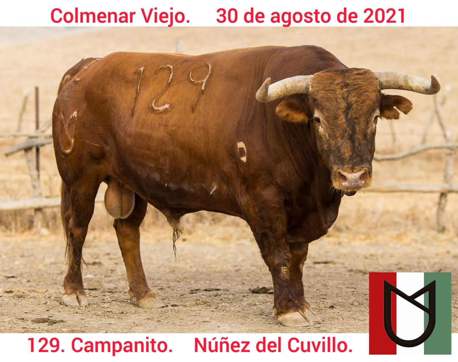 NC129campanito