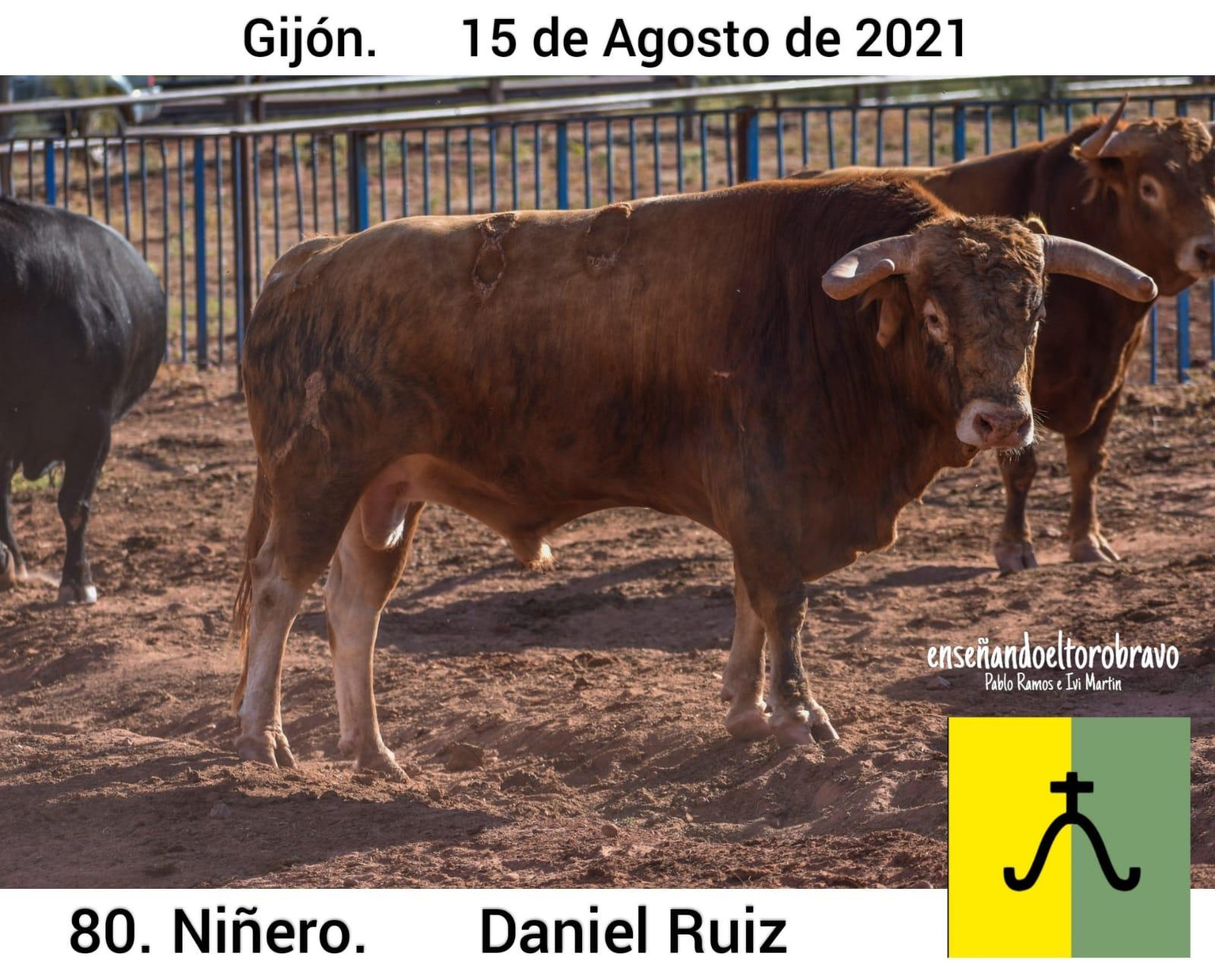 Toro-Daniel-Ruiz-Gijon-2