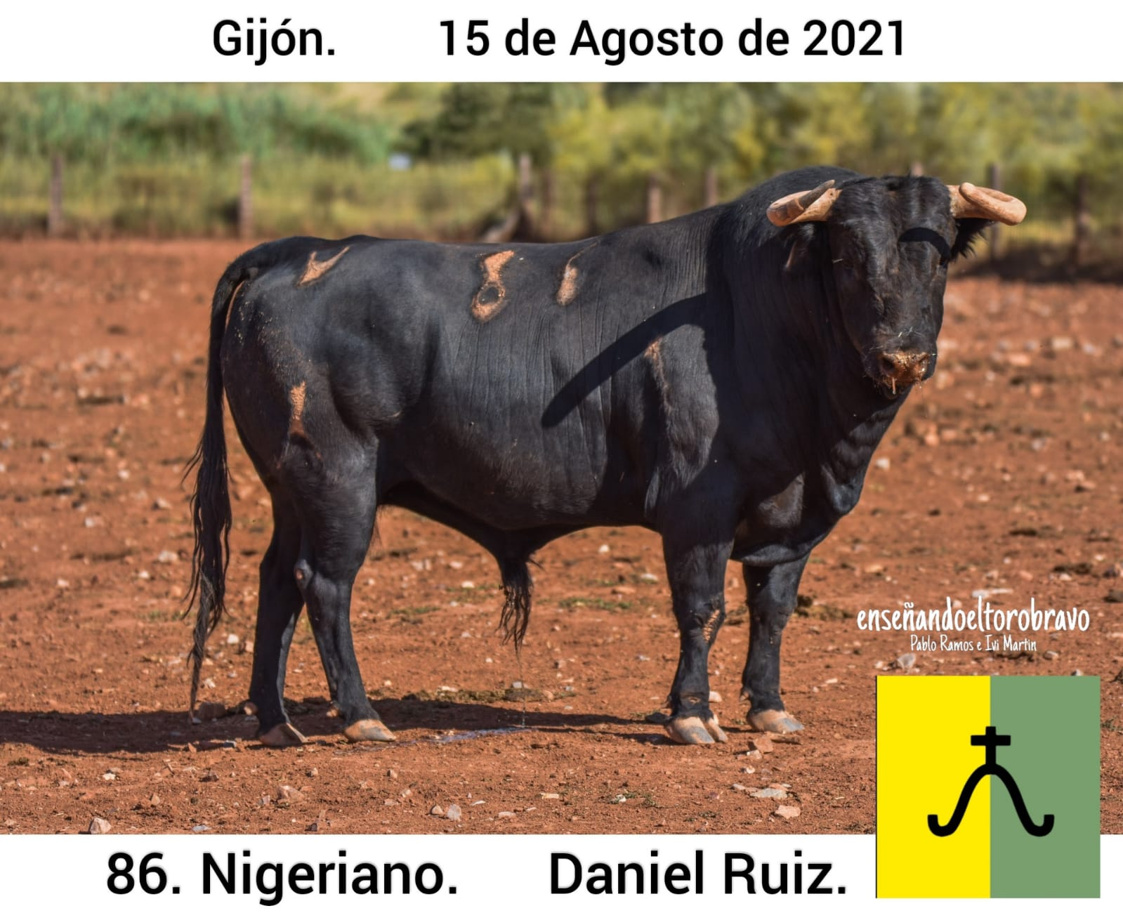 Toro-Daniel-Ruiz-Gijon-7
